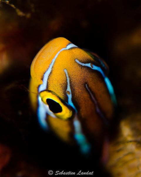 Diving in Karangasem, Indonesia - By Sebdive