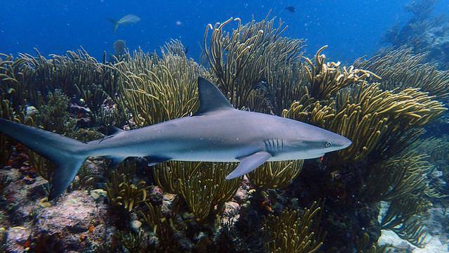 Diving in Sint Maarten, Blanche Bay - By Jyarbs